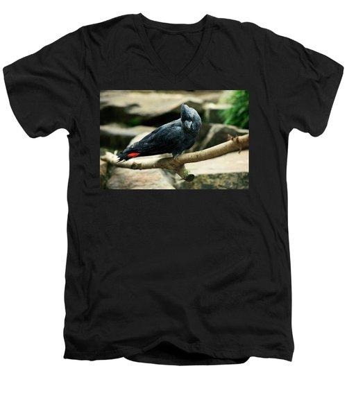 Black And Red Cockatoo. Men's V-Neck T-Shirt