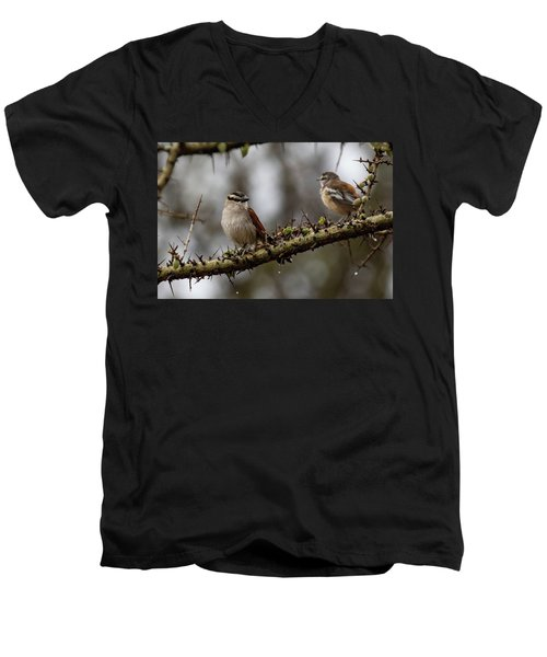 Black-crowned Tchagra And White-browed Scrub-robin Men's V-Neck T-Shirt