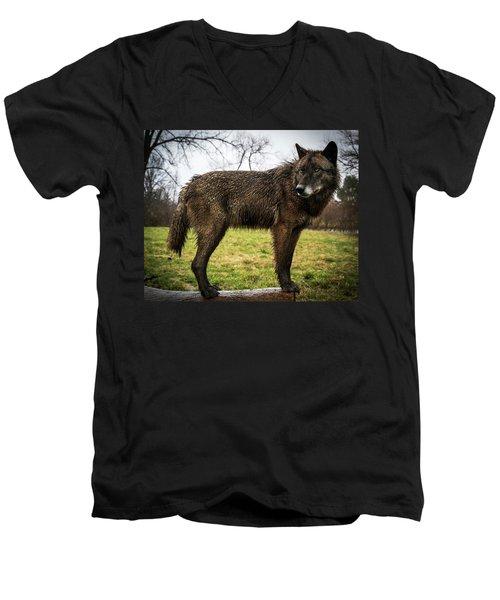 Black Wolf Men's V-Neck T-Shirt