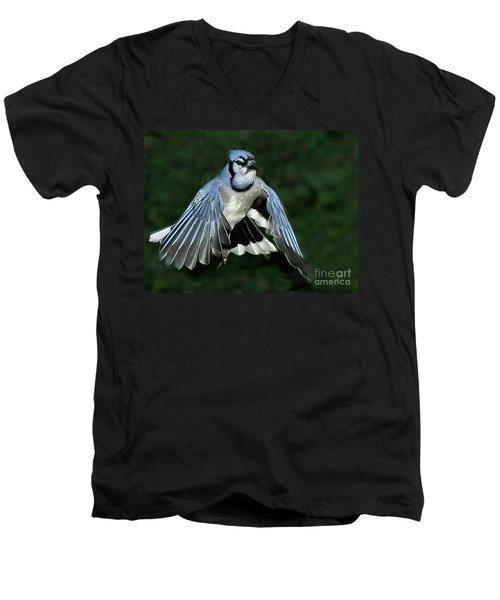 Blue Jay Men's V-Neck T-Shirt