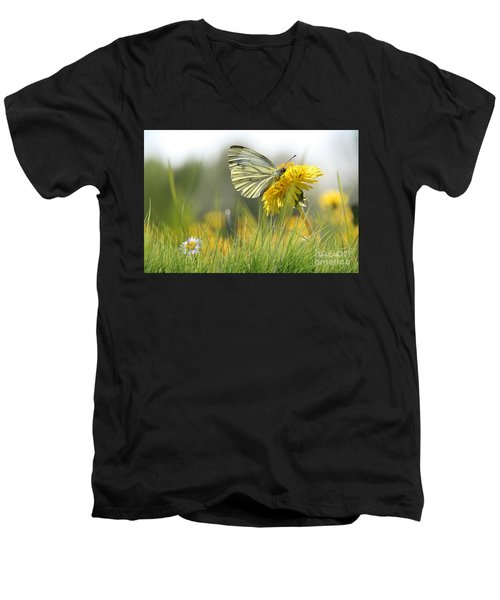 Butterfly On Dandelion Men's V-Neck T-Shirt
