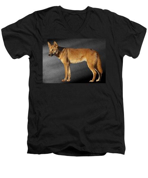 Dingo Men's V-Neck T-Shirt