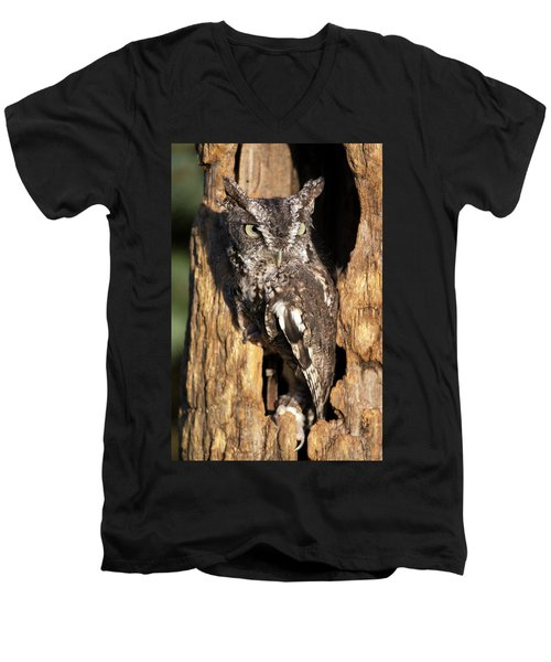 Eastern Screech Owl 92515 Men's V-Neck T-Shirt