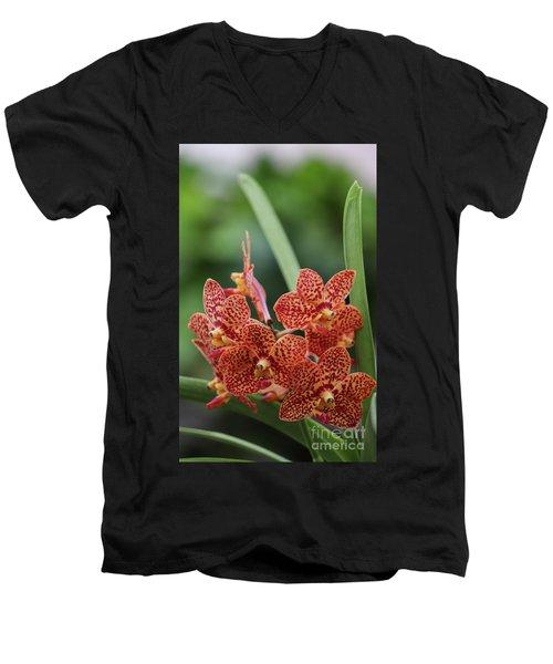 Family Of Orange Spotted Orchids Men's V-Neck T-Shirt