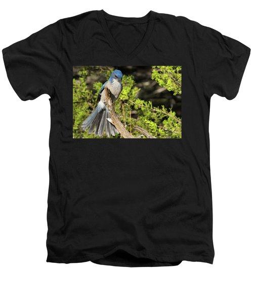 Fanning Scrub Jay Men's V-Neck T-Shirt