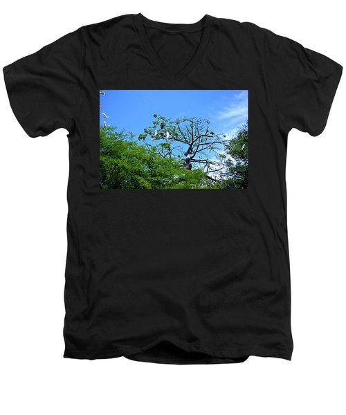 Ibis Risen Men's V-Neck T-Shirt