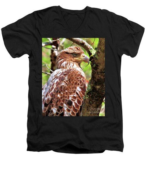 Immature Eagle Men's V-Neck T-Shirt