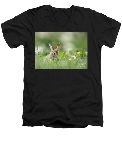 Little Hare Men's V-Neck T-Shirt