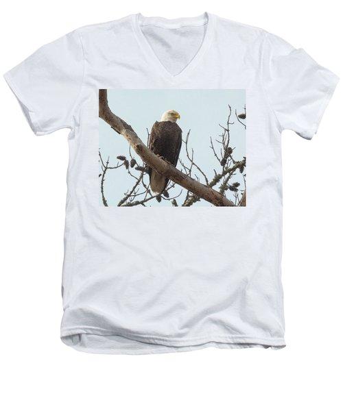 Resting Bald Eagle Men's V-Neck T-Shirt