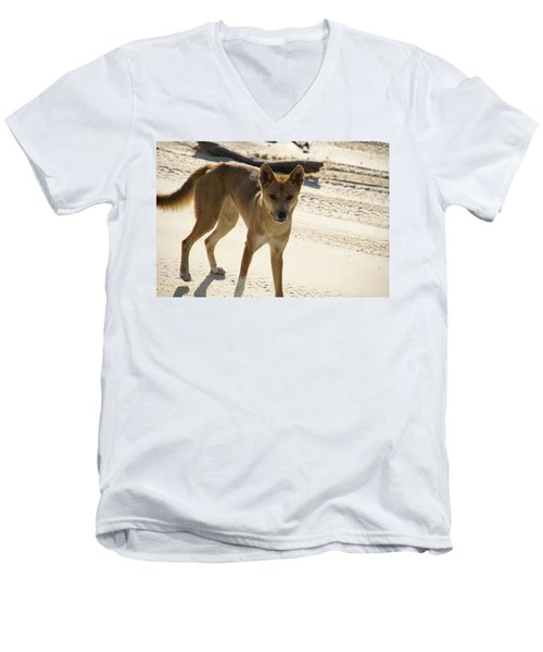 Dingo Men's V-Neck T-Shirt