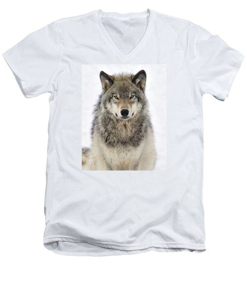 Timber Wolf Portrait Men's V-Neck T-Shirt