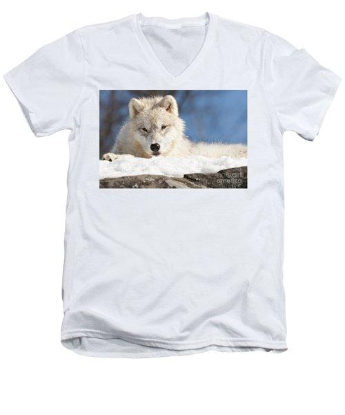 Arctic Wolf Pup Men's V-Neck T-Shirt
