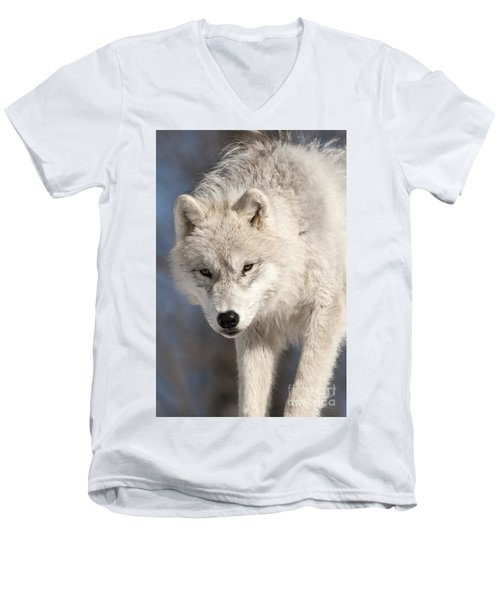 Arctic Wolf Pup Men's V-Neck T-Shirt