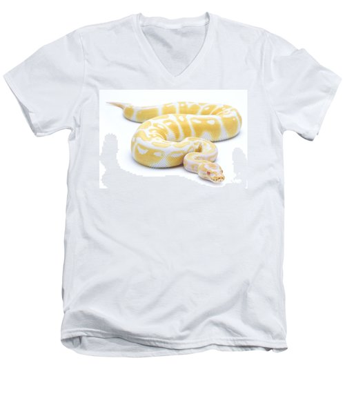 Albino Royal Python Men's V-Neck T-Shirt by Michel Gunther