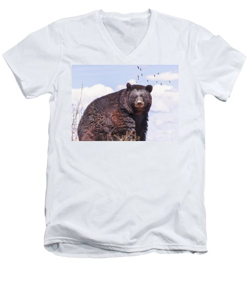 American Black Bear Men's V-Neck T-Shirt