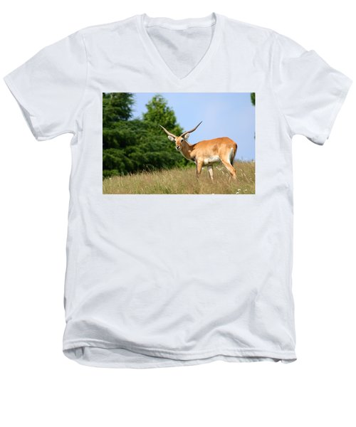 Antelope Men's V-Neck T-Shirt