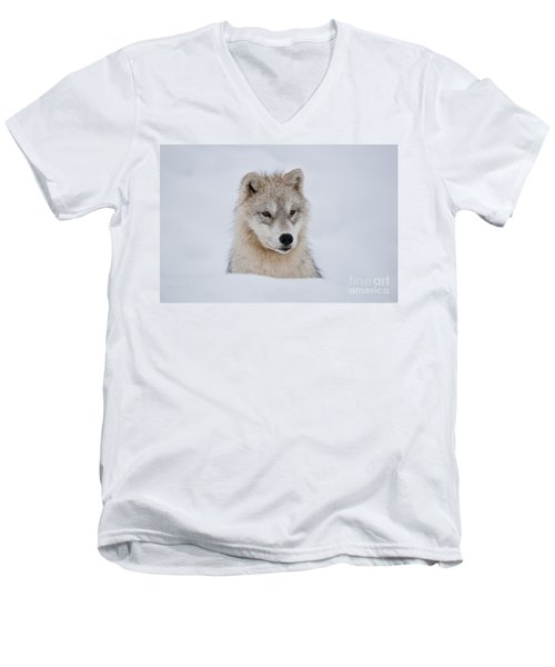 Arctic Pup In Snow Men's V-Neck T-Shirt
