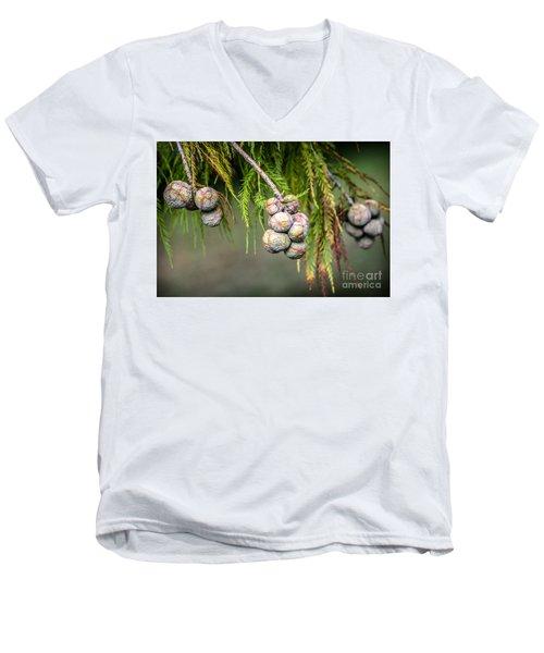 Bald Cypress Tree Seed Pods Men's V-Neck T-Shirt