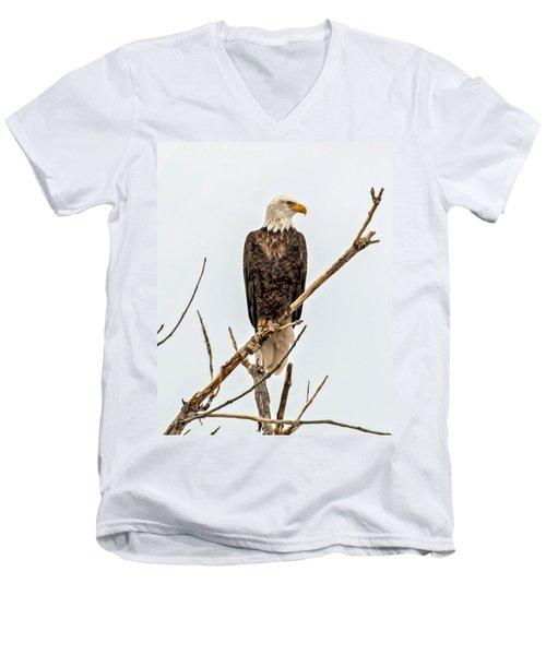 Bald Eagle On A Branch Men's V-Neck T-Shirt
