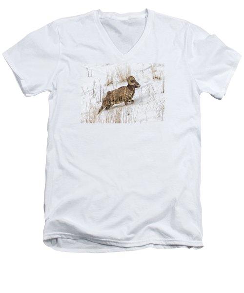 Bighorn In Yellowstone Men's V-Neck T-Shirt by Alan Toepfer