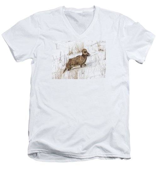 Bighorn In Yellowstone Men's V-Neck T-Shirt