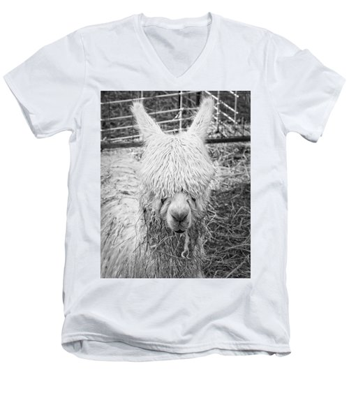 Black And White Alpaca Photograph Men's V-Neck T-Shirt by Keith Webber Jr