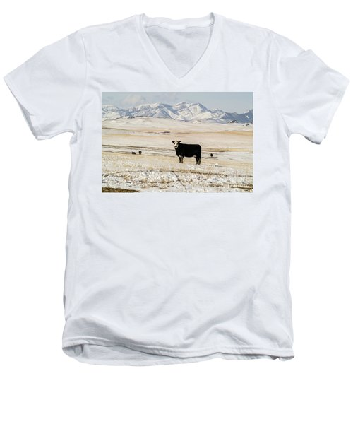 Men's V-Neck T-Shirt featuring the photograph Black Baldy Cows by Sue Smith