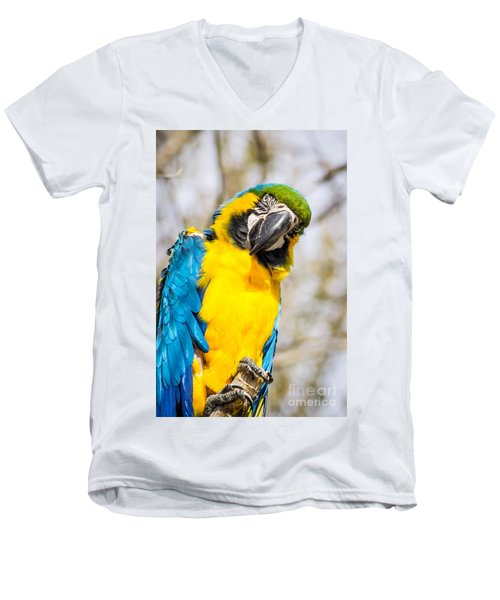 Blue And Gold Macaw Parrot Men's V-Neck T-Shirt