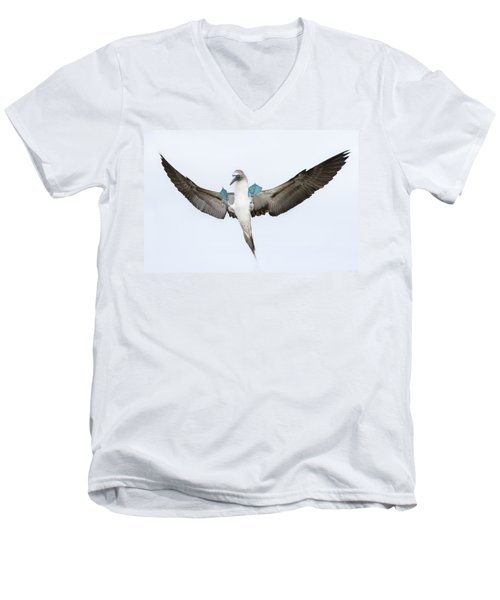 Blue-footed Booby Landing Galapagos Men's V-Neck T-Shirt by Tui De Roy