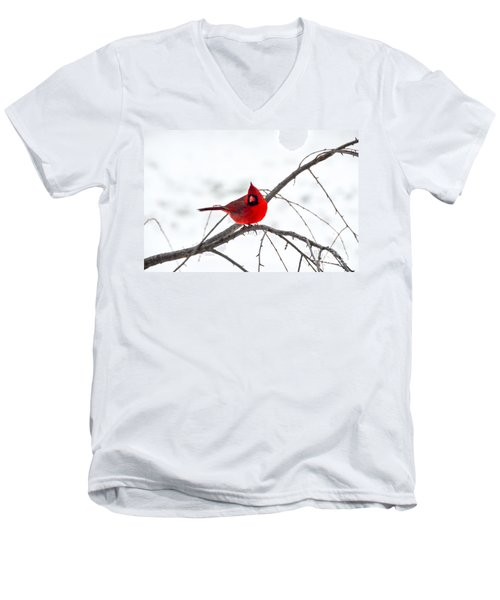 Cardinal On A Branch  Men's V-Neck T-Shirt
