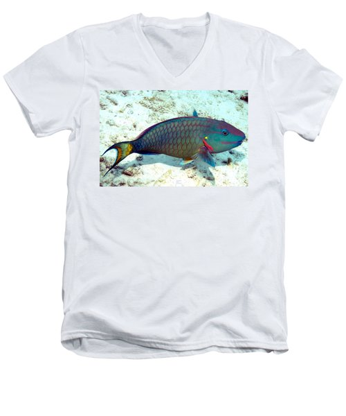 Caribbean Stoplight Parrot Fish In Rainbow Colors Men's V-Neck T-Shirt by Amy McDaniel