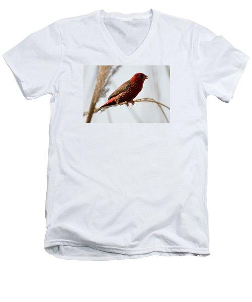 Colour Me Red Men's V-Neck T-Shirt by Fotosas Photography