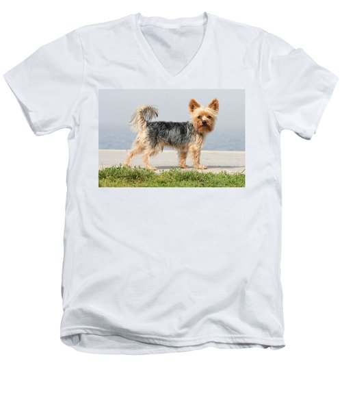 Cut Little Dog In The Sun Men's V-Neck T-Shirt
