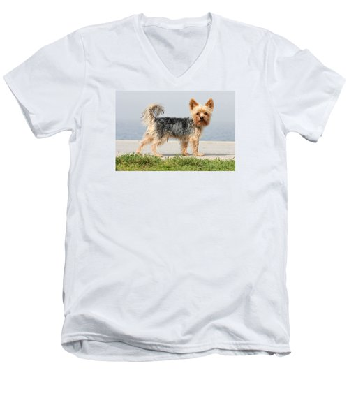 Men's V-Neck T-Shirt featuring the photograph Cut Little Dog In The Sun by Dreamland Media