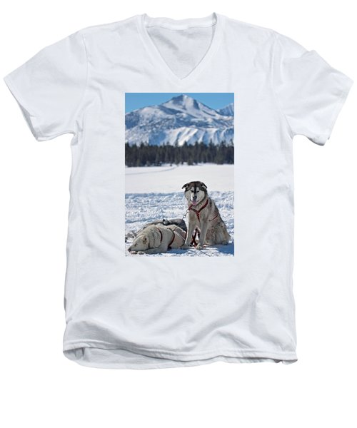 Dog Team Men's V-Neck T-Shirt by Duncan Selby