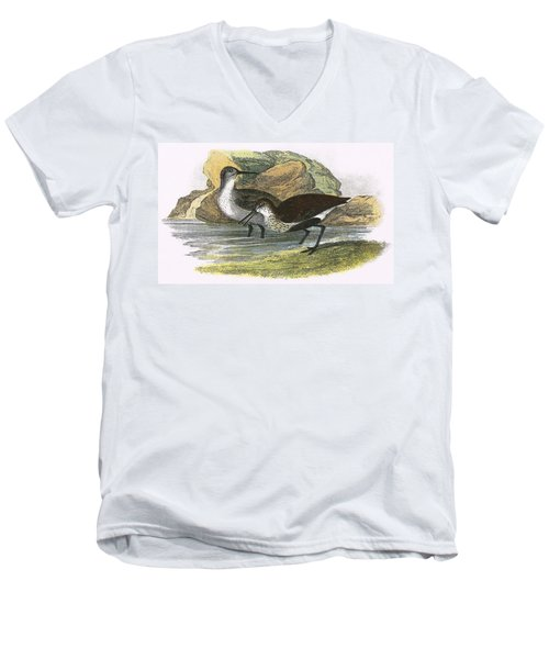 Dunlin Men's V-Neck T-Shirt