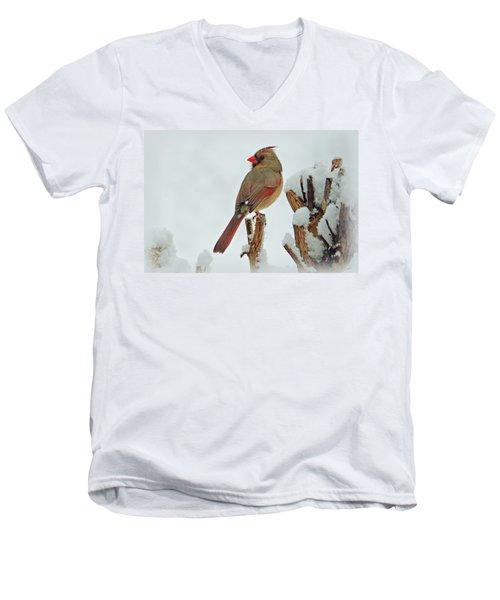 Female Cardinal In The Snow Men's V-Neck T-Shirt