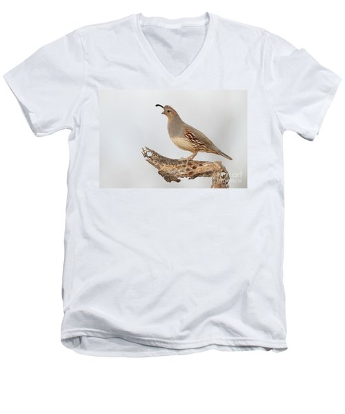 Female Gambel's Quail Men's V-Neck T-Shirt by Bryan Keil