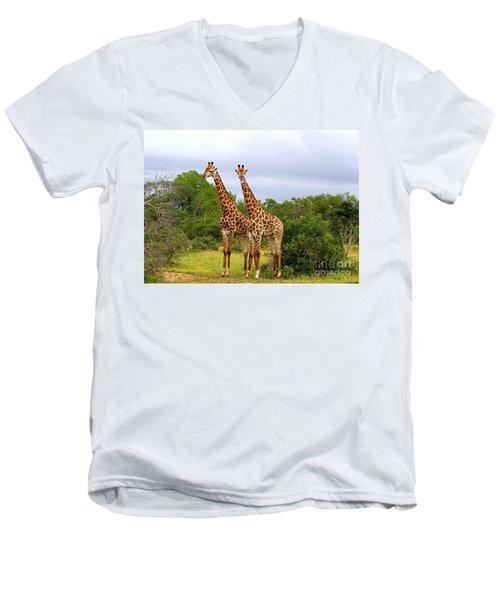 Giraffe Males Before The Storm Men's V-Neck T-Shirt