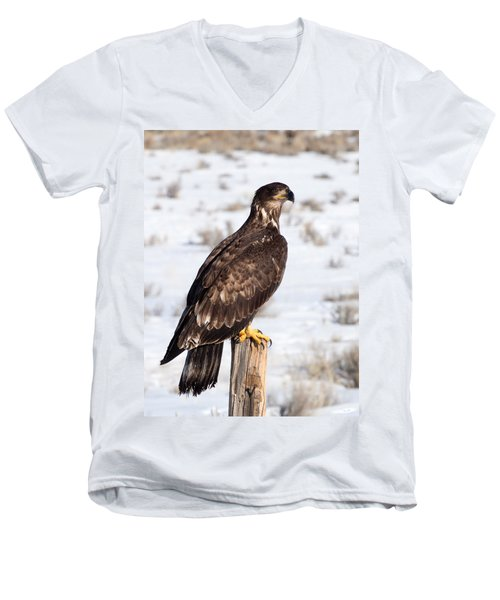 Golden Eagle On Fencepost Men's V-Neck T-Shirt