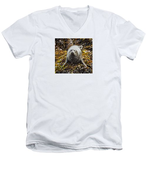 Harbor Seal Men's V-Neck T-Shirt by Alice Cahill