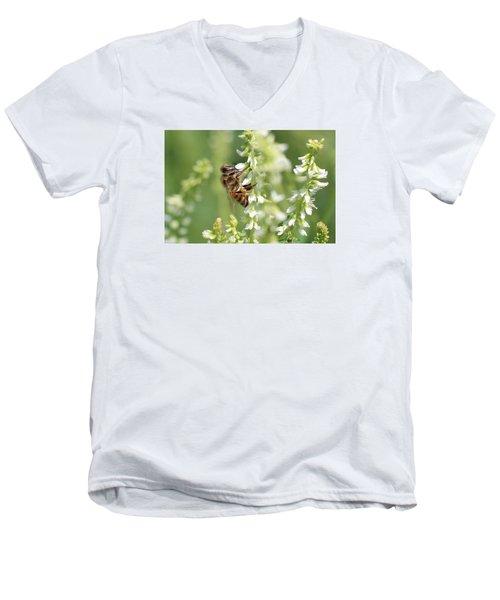 Honeybee On Sweet Clover Men's V-Neck T-Shirt by Lucinda VanVleck