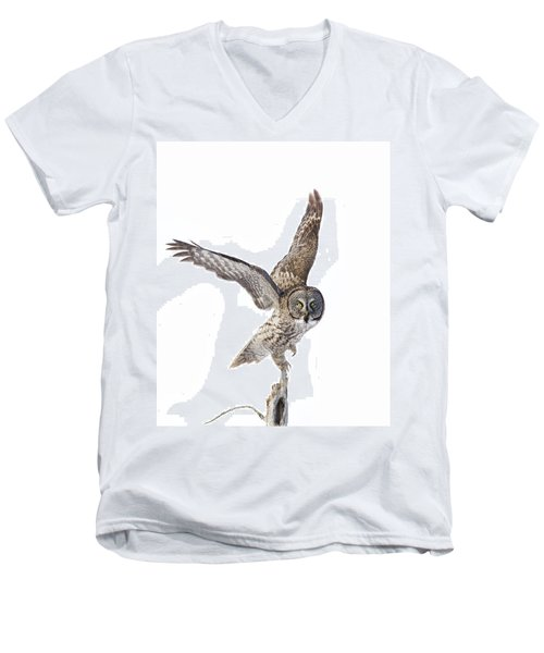 Lapland Owl On White Men's V-Neck T-Shirt by Mircea Costina Photography
