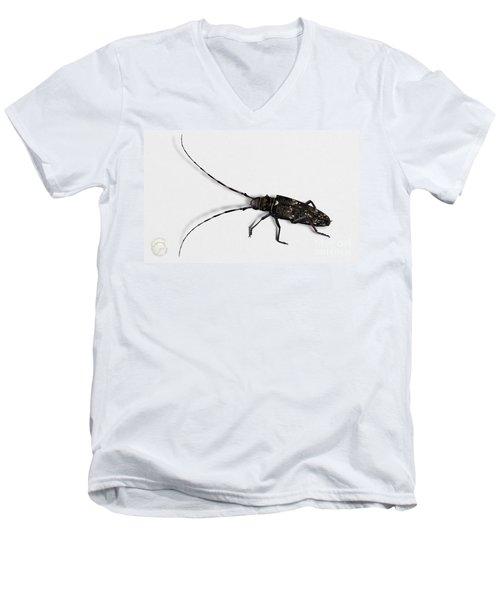 Long-hornded Wood Boring Beetle Monochamus Sartor - Coleoptere Monochame Tailleur - Men's V-Neck T-Shirt