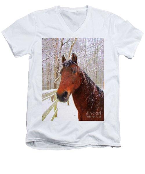 Majestic Morgan Horse Men's V-Neck T-Shirt