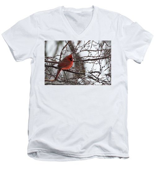 Northern Red Cardinal In Winter Men's V-Neck T-Shirt