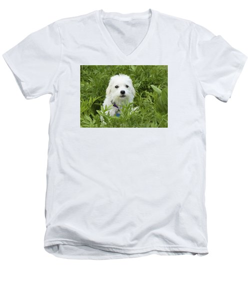 Men's V-Neck T-Shirt featuring the photograph Oops Busted - Cute White Dog by Jane Eleanor Nicholas