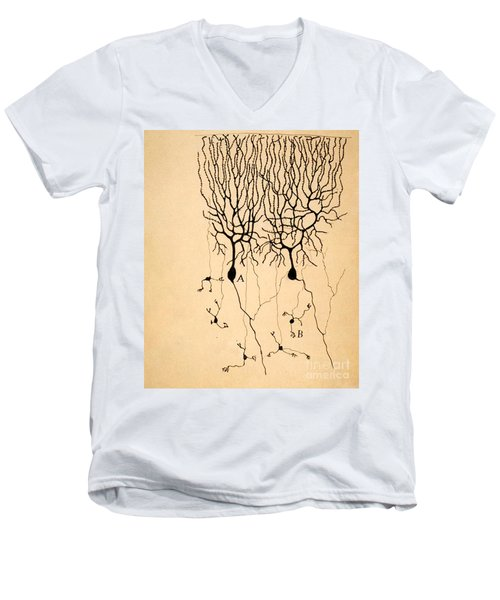 Purkinje Cells By Cajal 1899 Men's V-Neck T-Shirt by Science Source