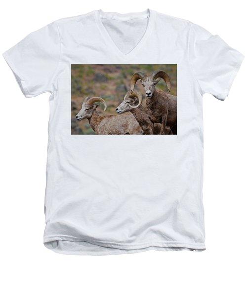 Rams In Three Men's V-Neck T-Shirt