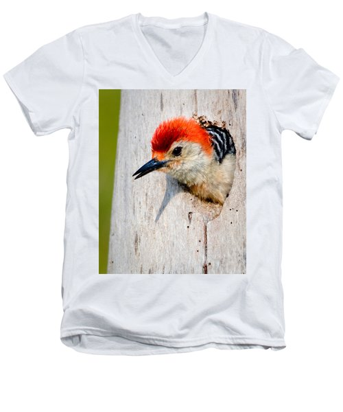 Red-bellied Woodpecker II Men's V-Neck T-Shirt by William Beuther